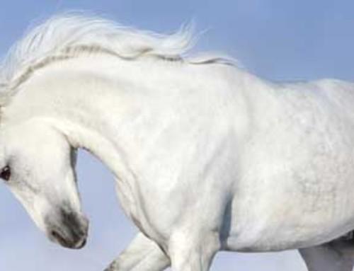 Salesvideo Het witte paarden effect